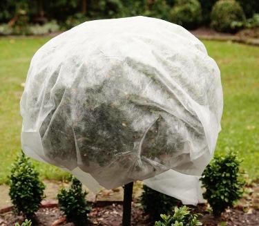 Schnittzeiten [tipps Für Das Überwintern Ihrer Pflanzen ... Winterharte Balkonpflanzen Pflanzarten Und Pflege Tipps