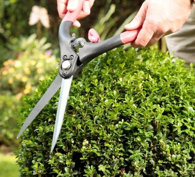 buchsbaumschnitt
